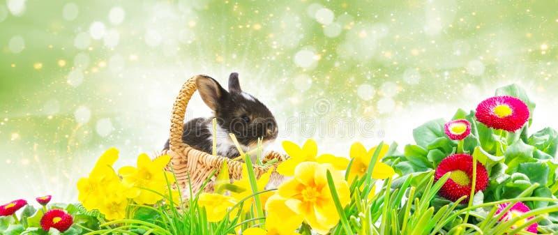 复活节兔子篮子,在Bokeh前面的复活节草坪 库存图片