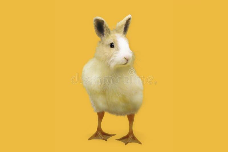 复活节兔子鸭子假日 免版税库存图片