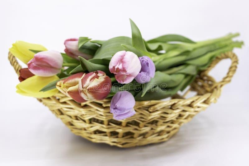 复活节和春天,花束郁金香 库存图片