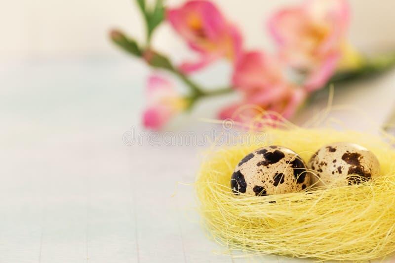 复活节在巢的在蓝色背景的鹌鹑蛋和花 春天假日 您的文本的地方 免版税库存图片