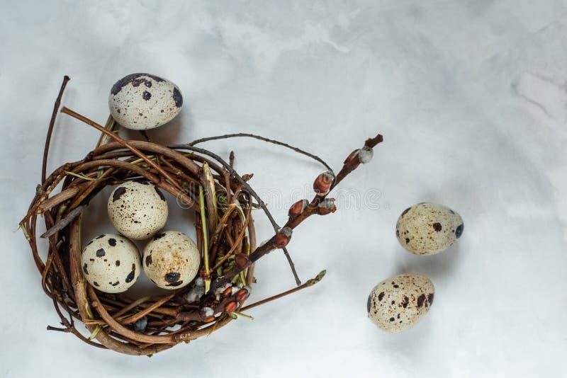 复活节天 小巢用在白色背景的鹌鹑蛋,与文本输入、商标等等的自由空间 免版税库存图片