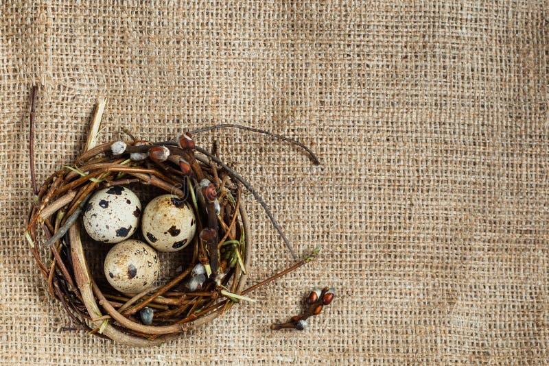 复活节天 小巢用在麻袋布背景,粗麻布纹理的鹌鹑蛋  文本输入、商标等等的自由空间 免版税图库摄影