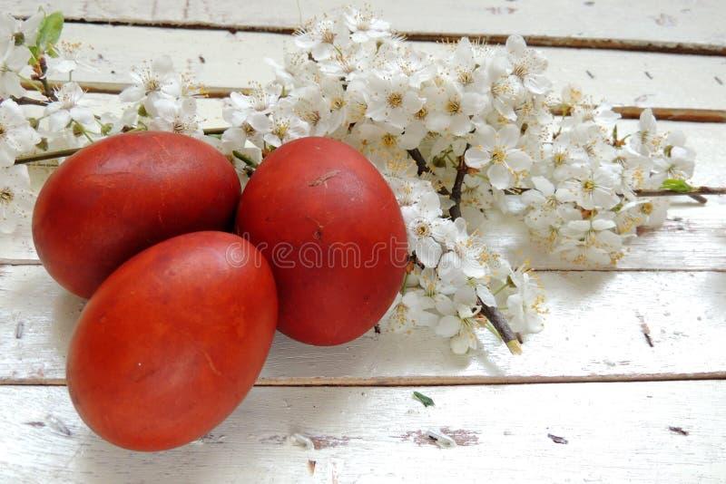 复活节彩蛋和樱桃枝杈 库存图片