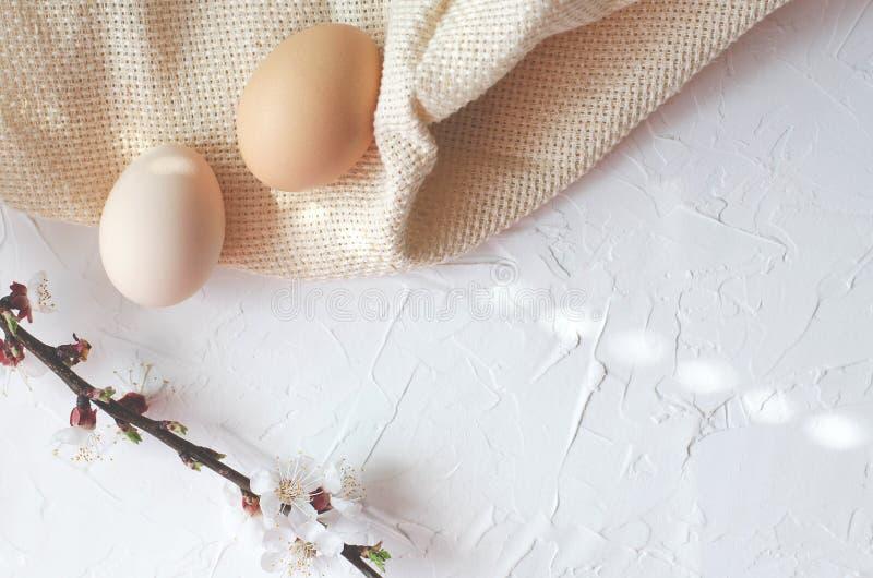复活节结构的寇特鸡蛋和树枝杈有开花的 免版税库存照片
