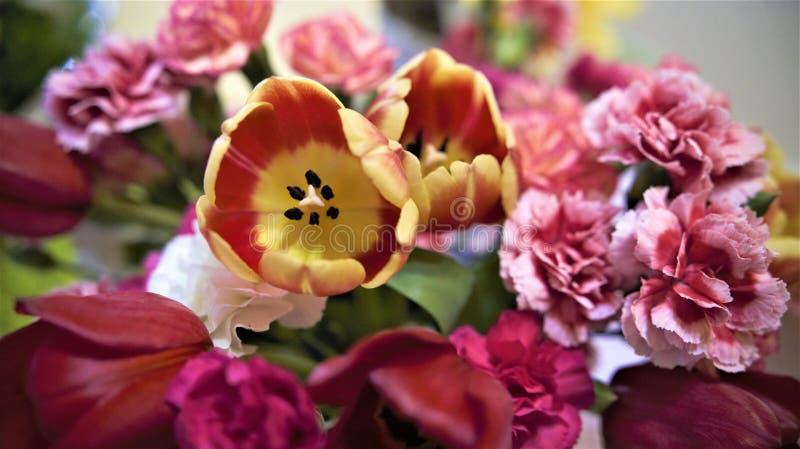 复活节花带来可以阵雨 库存照片
