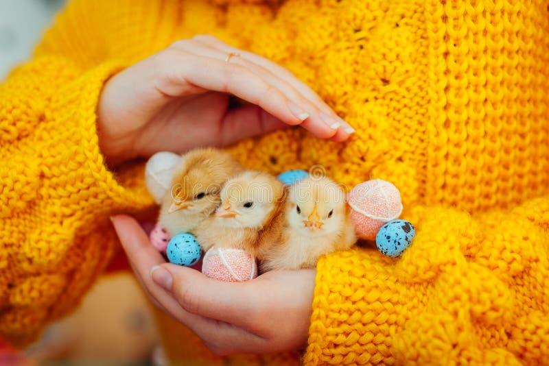 复活节鸡 在手中拿着三只橙色小鸡的妇女围拢用复活节彩蛋 库存照片