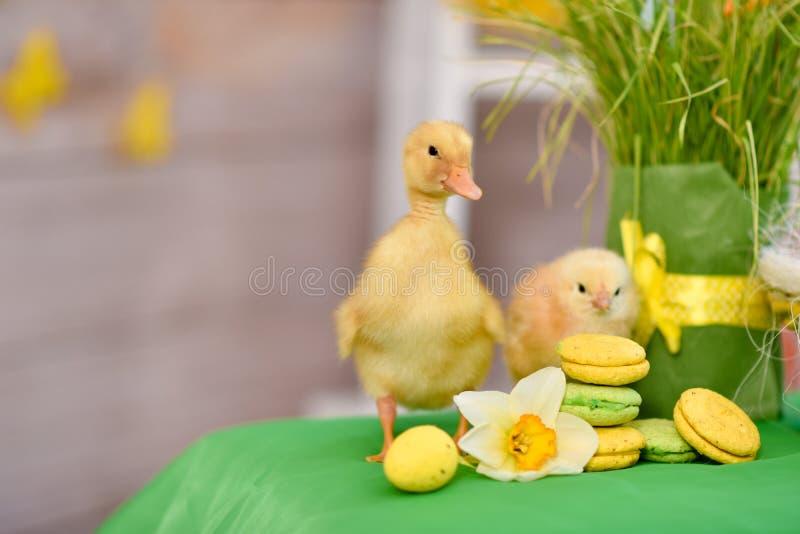 复活节鸭子,与复活节装饰 免版税图库摄影