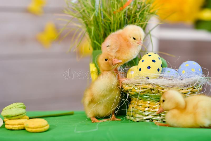 复活节鸭子,与复活节装饰 库存照片