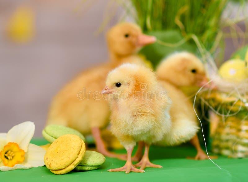 复活节鸭子,与复活节装饰 库存图片
