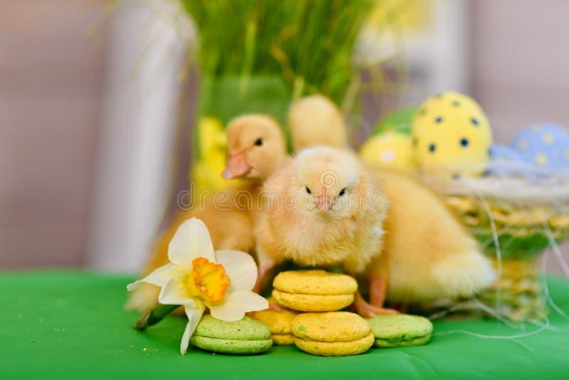 复活节鸭子,与复活节装饰 免版税库存照片