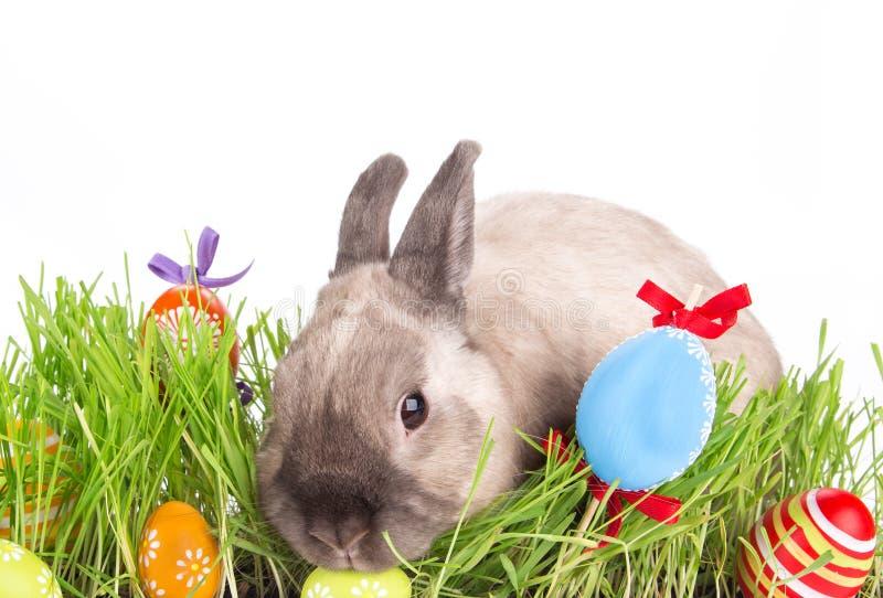 复活节兔子和复活节彩蛋在绿草 免版税图库摄影