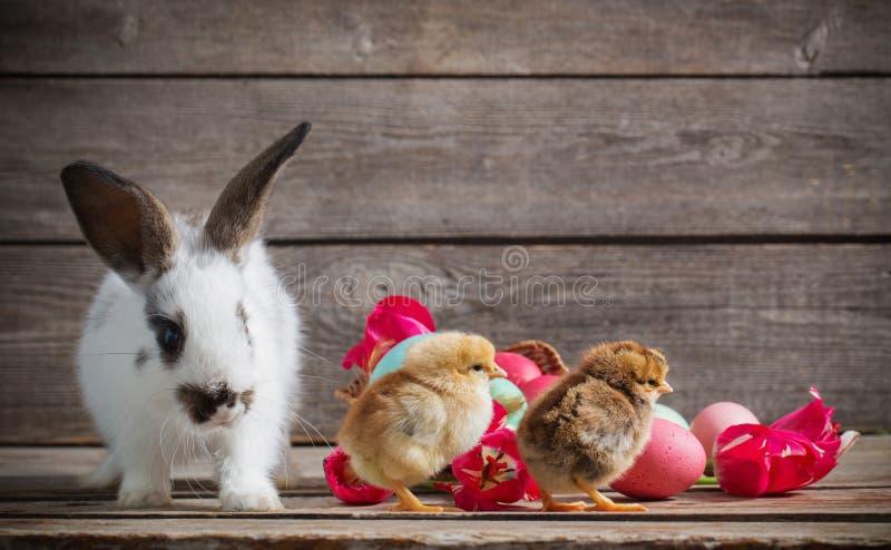鸡用在木背景的复活节彩蛋