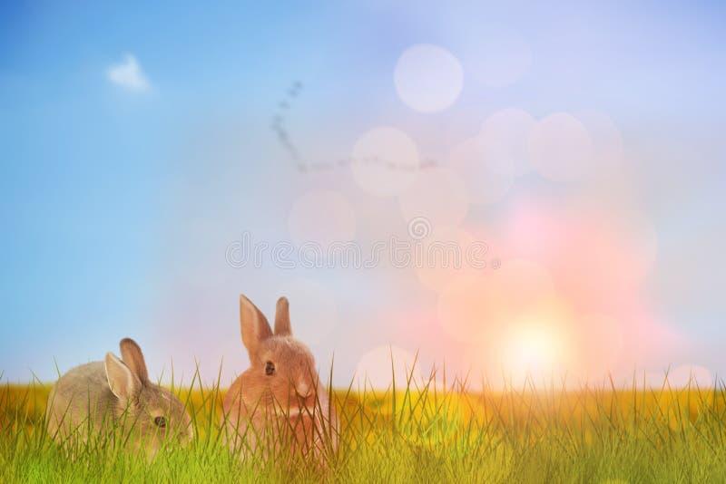 复活节兔子特写镜头的综合图象  库存照片