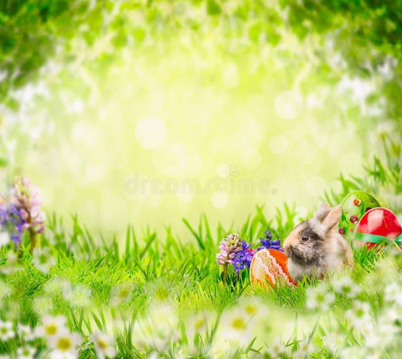 复活节兔子用鸡蛋和花在草在绿色庭院树离开 免版税库存照片