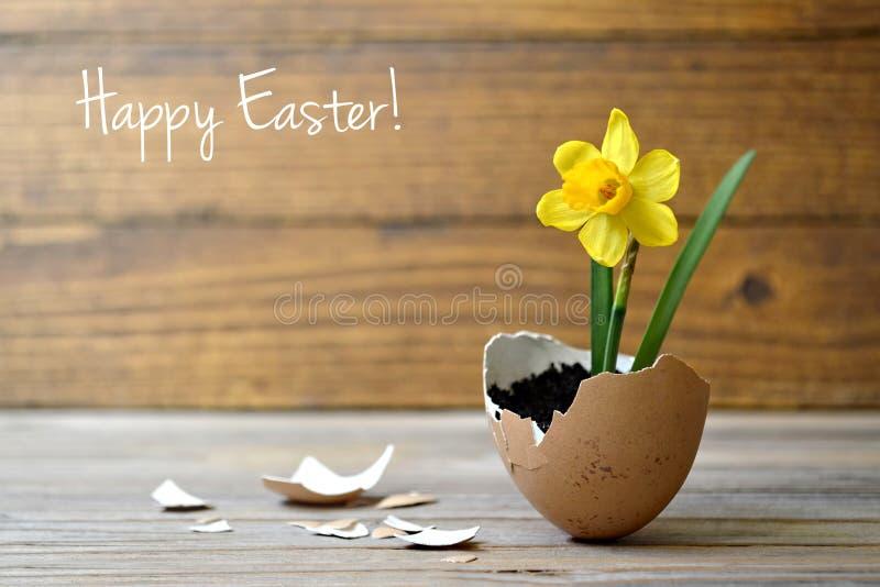 复活节卡片:在蛋壳的春天花 库存照片