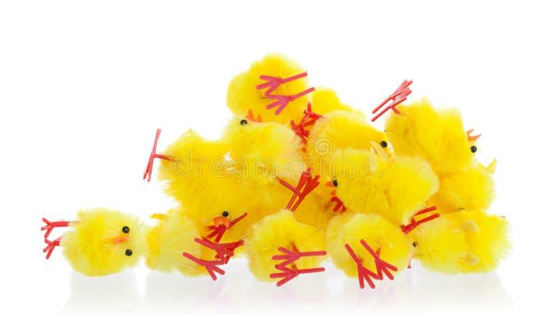 复活节小鸡丰盈,选择聚焦 库存照片