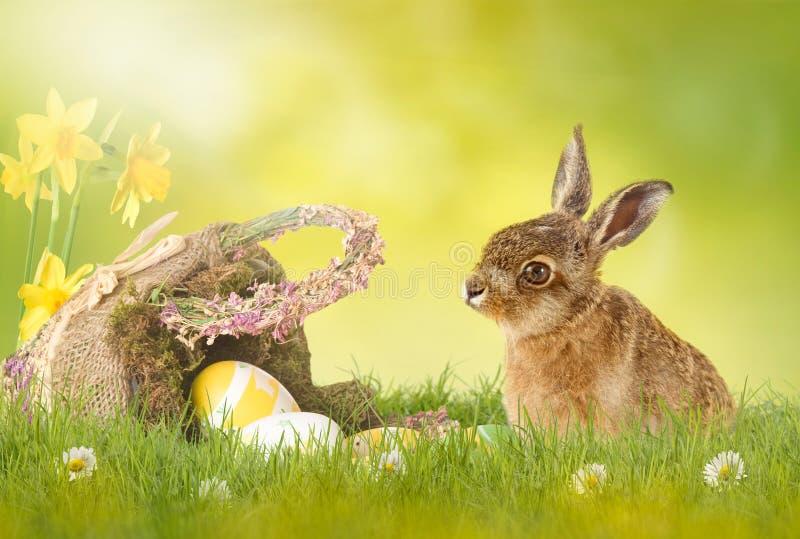复活节快乐;复活节兔子 免版税库存照片