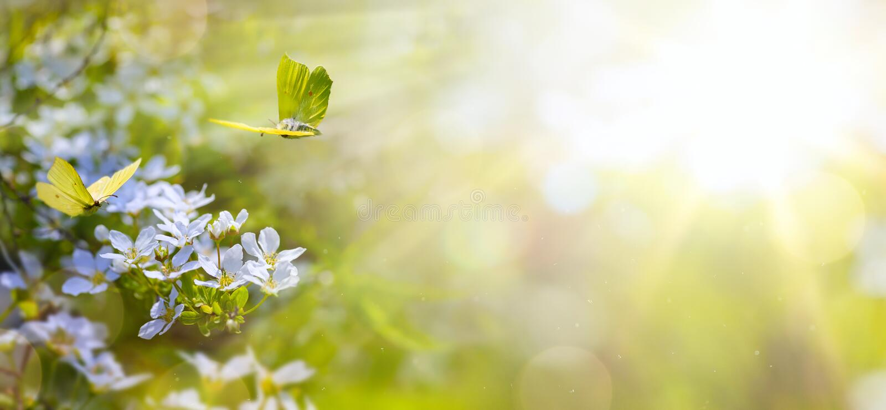 复活节春天花背景;花和黄色蝴蝶 免版税库存图片