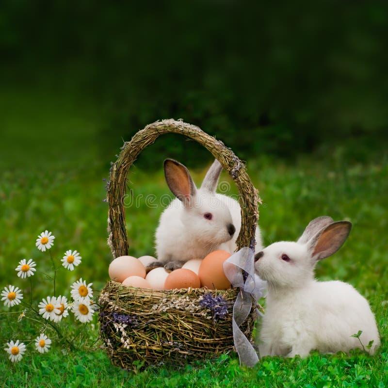 复活节篮子和复活节兔子 免版税库存图片