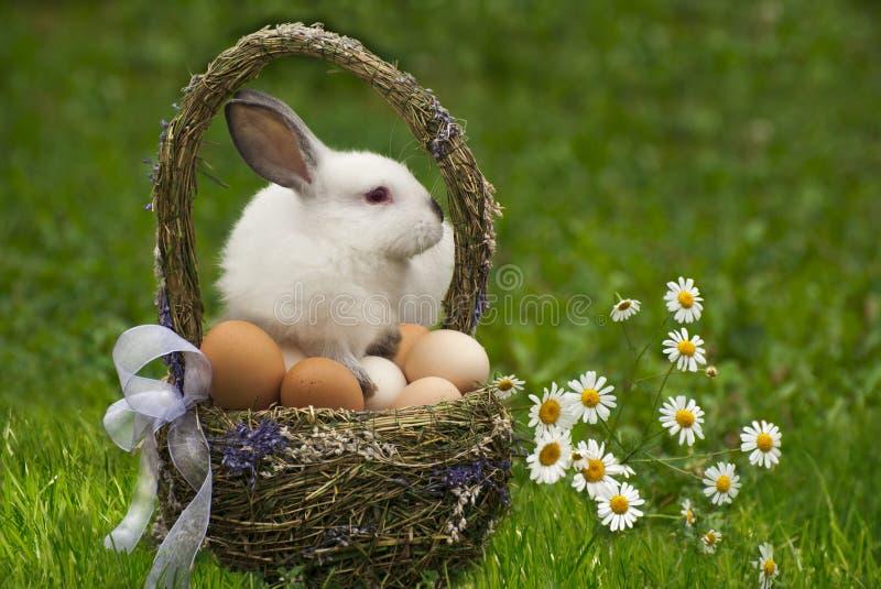 复活节篮子和复活节兔子 免版税库存照片