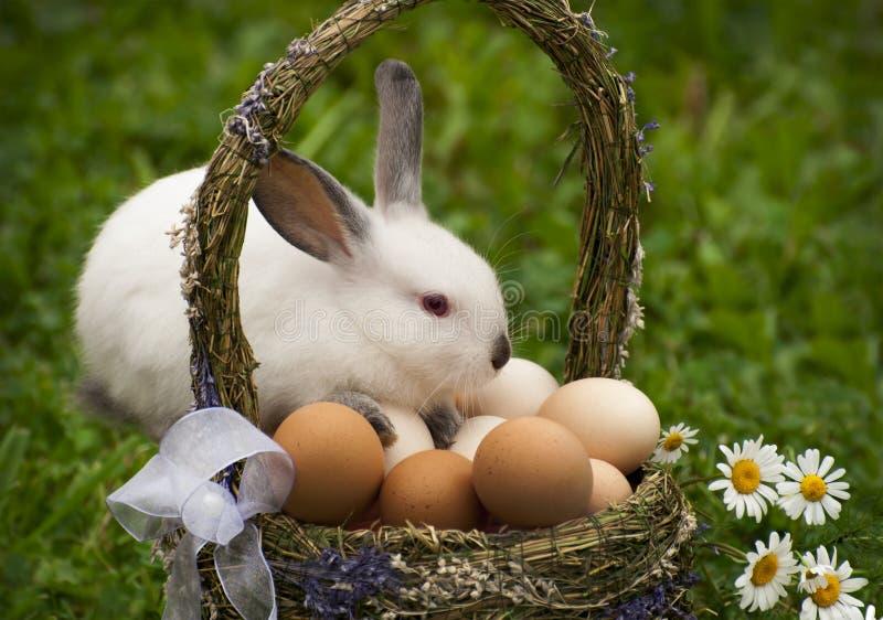 复活节篮子和复活节兔子 免版税图库摄影