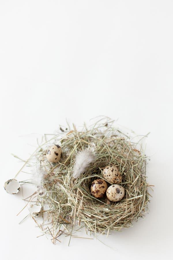 复活节装饰鹌鹑蛋在白色bac的鸟` s巢在 免版税库存照片