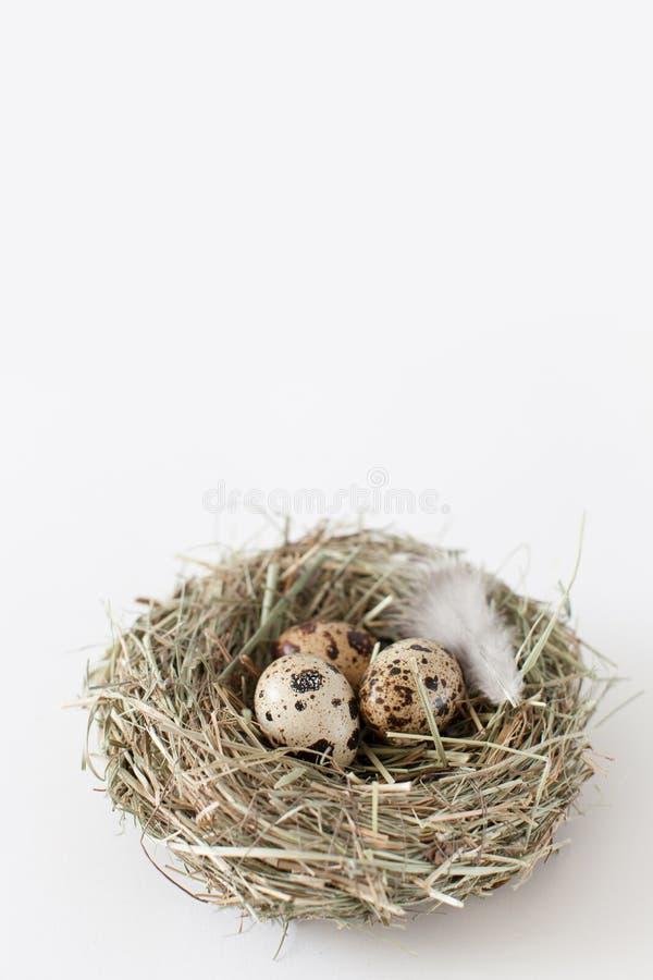 复活节装饰鹌鹑蛋在鸟` s巢在 图库摄影