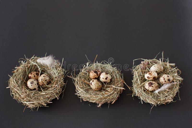 复活节装饰,三鸟巢用与鸡的鹌鹑蛋 库存照片