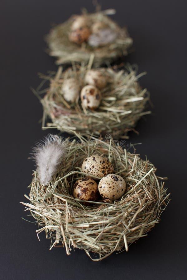 复活节装饰,三鸟巢用与鸡的鹌鹑蛋 免版税库存图片