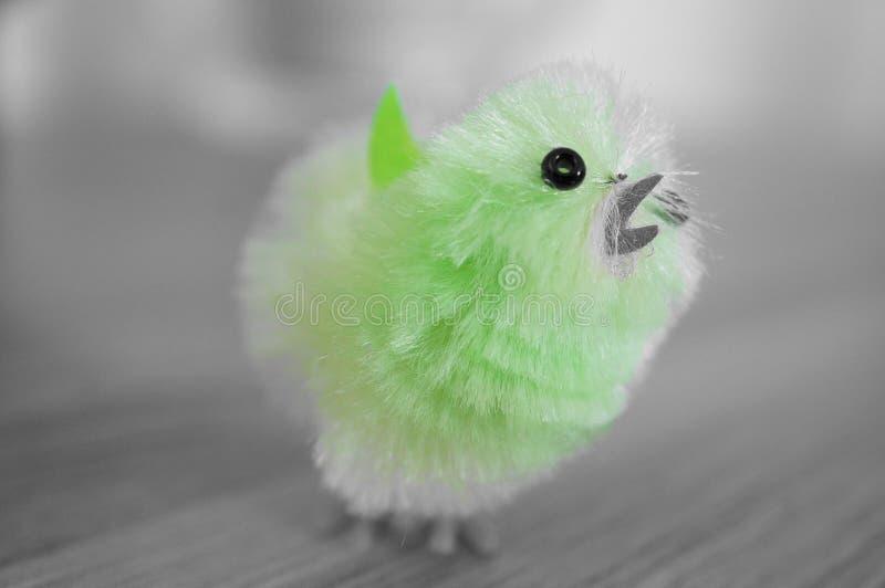 复活节鸟 免版税库存图片