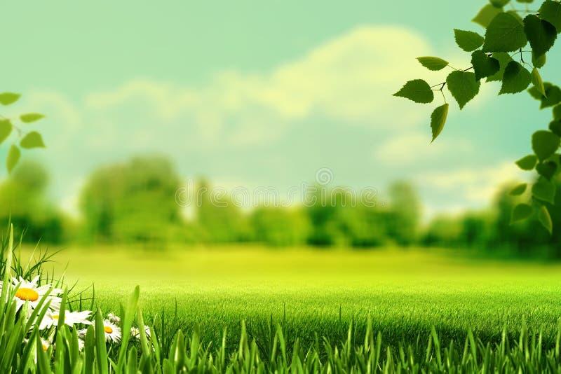 夏令时,与夏天草甸, gra的摘要自然本底 免版税库存图片