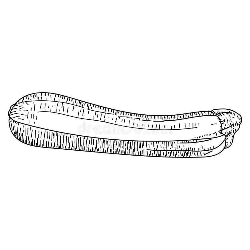 夏南瓜得出的传染媒介例证 查出的夏南瓜 皇族释放例证
