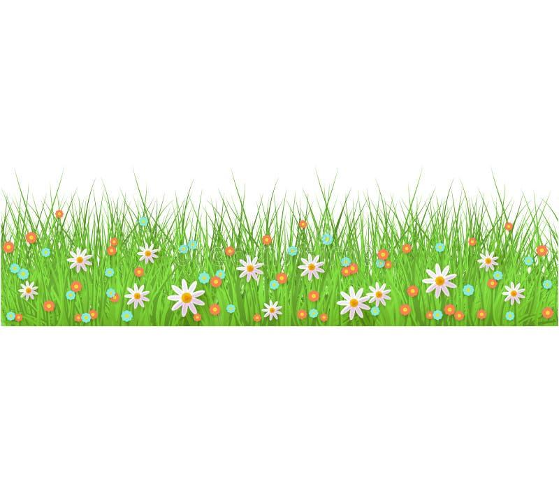 夏天、春天花卉豪华的绿草和草坪无缝的边界在被隔绝的背景在现实样式 库存例证