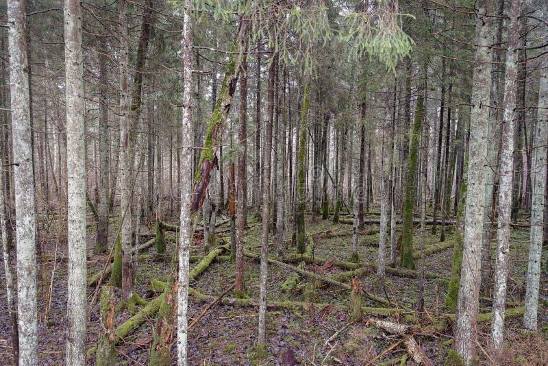 夏天、森林、树和早晨好 免版税库存图片