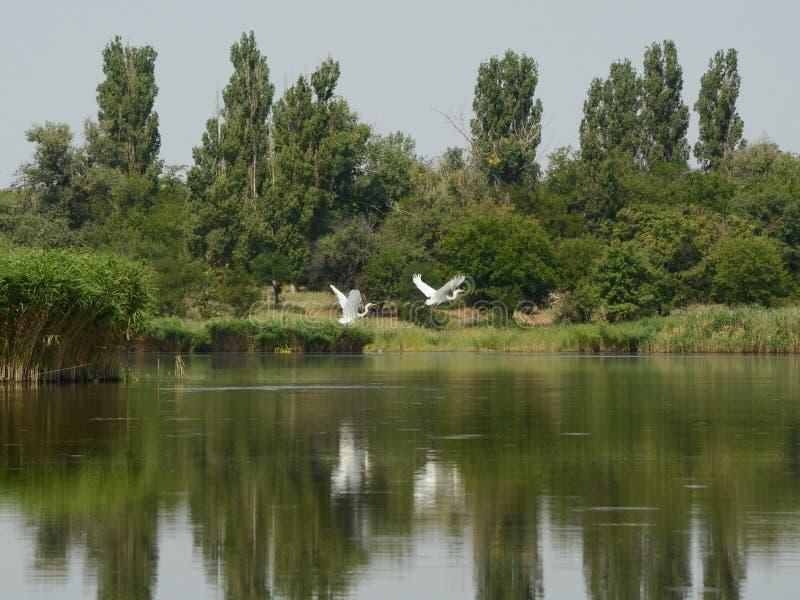 夏天与白鹭的河风景在雨前 库存照片