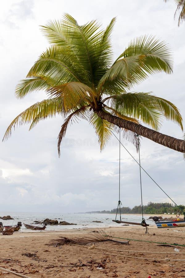 夏天休假和假期背景概念的在热带海滩的可可椰子树 库存照片