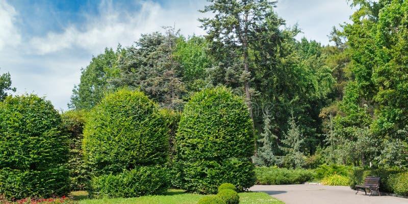 夏天公园、树篱、绿色草甸和蓝天 宽照片 库存照片