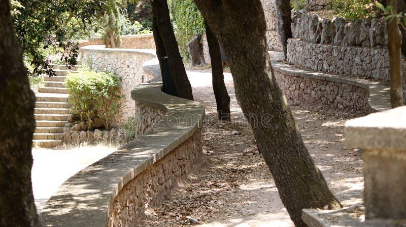 夏天公园树 免版税库存图片