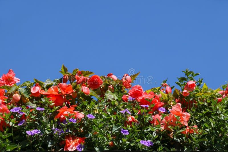夏天反对一清楚的天空蔚蓝的地貌面 免版税库存图片