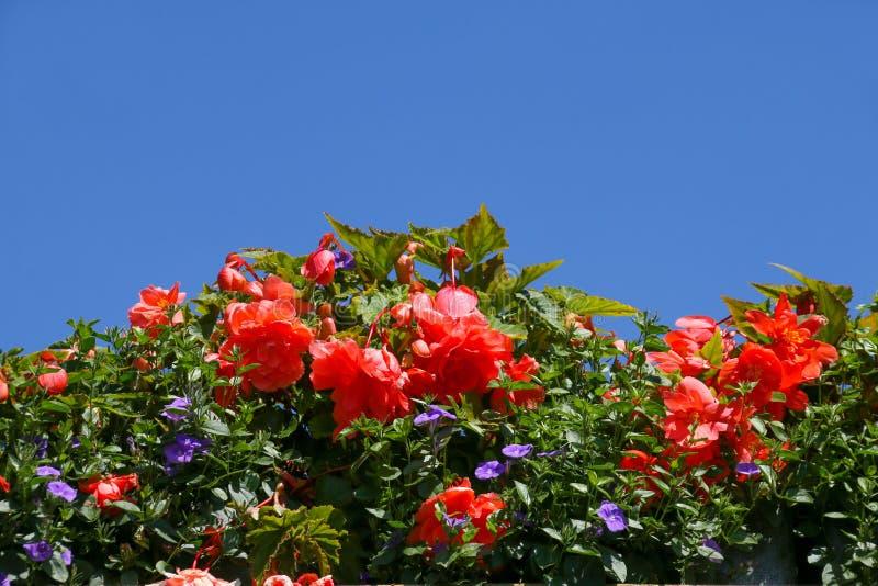 夏天反对一清楚的天空蔚蓝的地貌面 库存照片