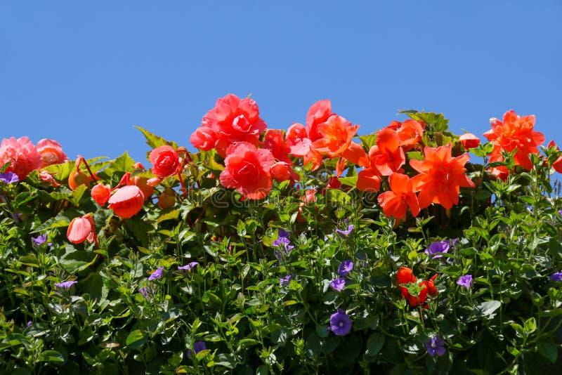夏天反对一清楚的天空蔚蓝的地貌面 免版税库存照片