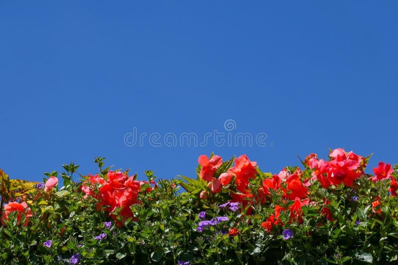 夏天反对一清楚的天空蔚蓝的地貌面 免版税图库摄影