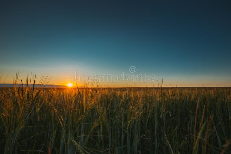 夏天发光在年轻绿色上W农业风景的太阳  免版税图库摄影