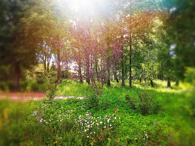 夏天和绿色天 库存照片