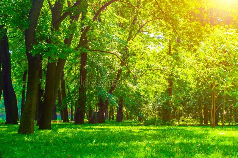 夏天在晴朗的天气-软的阳光和狭窄的道路的公园风景点燃的公园树 夏天公园自然 库存图片