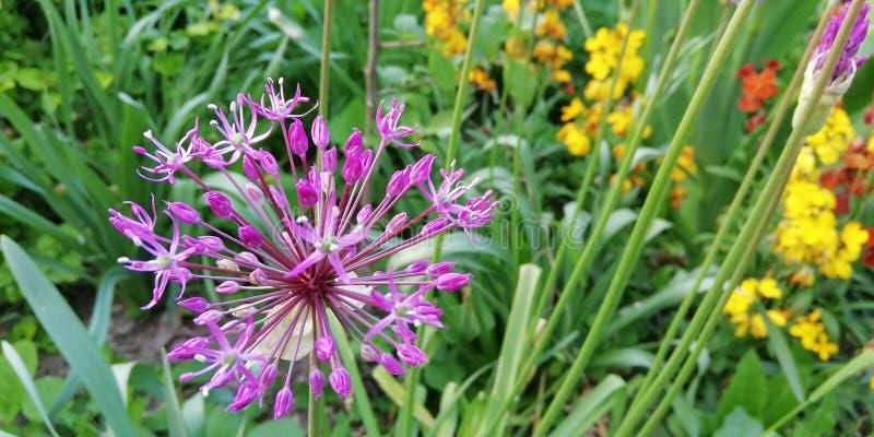 夏天在绿草背景的草甸花  轻的花卉背景 免版税库存照片