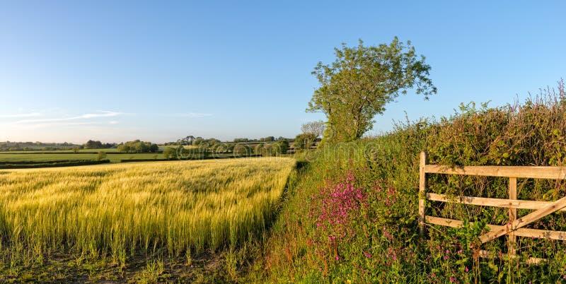 夏天在英国乡下 库存图片