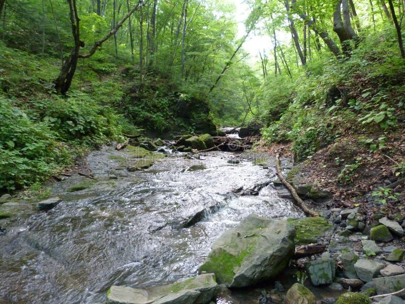 夏天在雨以后的森林小河 库存照片