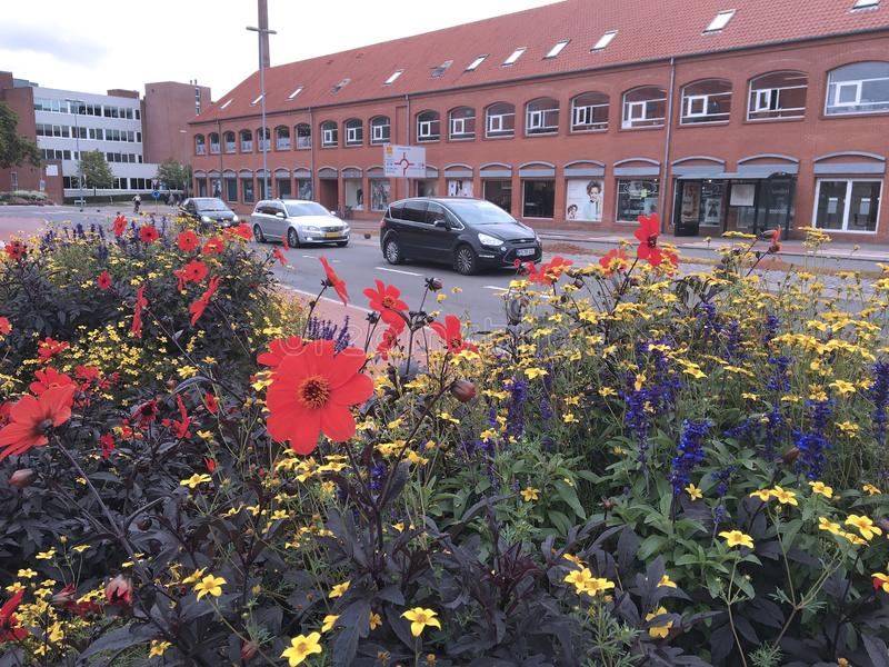 夏天在Holstebro,丹麦 免版税库存图片