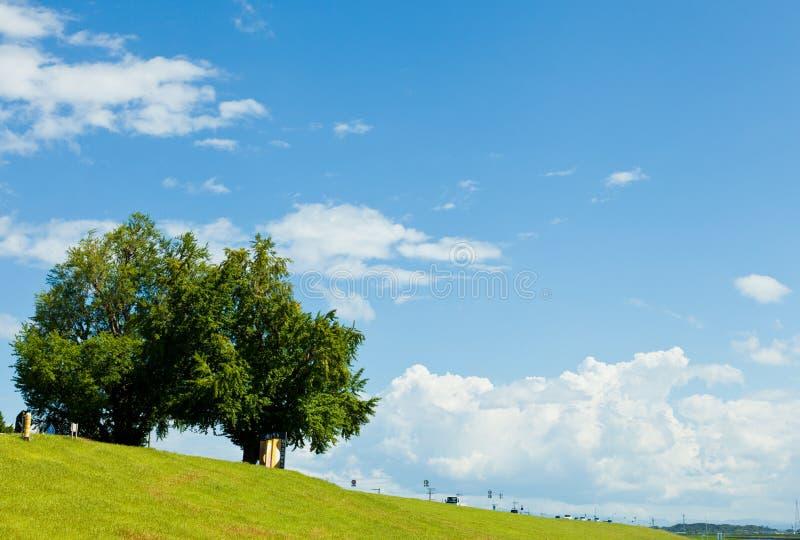 夏天构树和结河岸在寿命中混凝土建筑设计天空图片